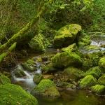 El Bosque Astur
